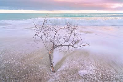 Driftwood with flowing tide on a beach