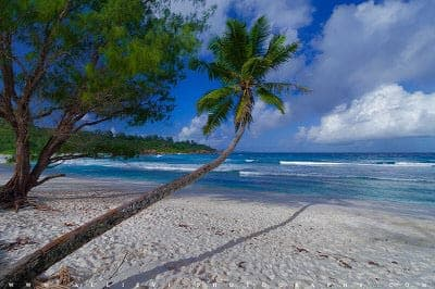 Beach with palm in Seychelles islands