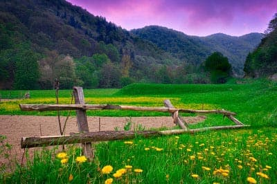 Wooden fence in a meadow