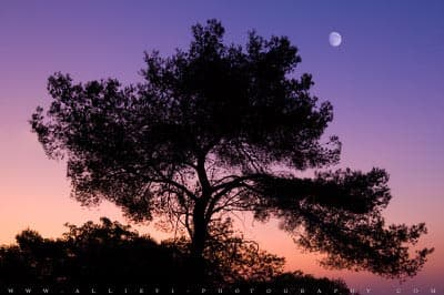 Silhouette of a tree with moon