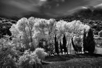 Trees infrared photo