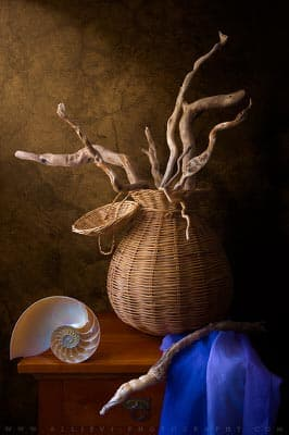 A still life photograph of driftwood and a Nautilus shell.