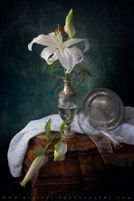 A still life photograph of liliums flowers.