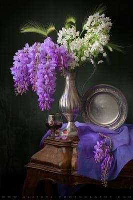 A still life photograph of Wisteria and Allium ursinum flowers.