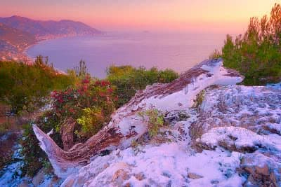 A dead tree trunk partially covered in snow lies near a bush of red berries with a view of the sea on the back.